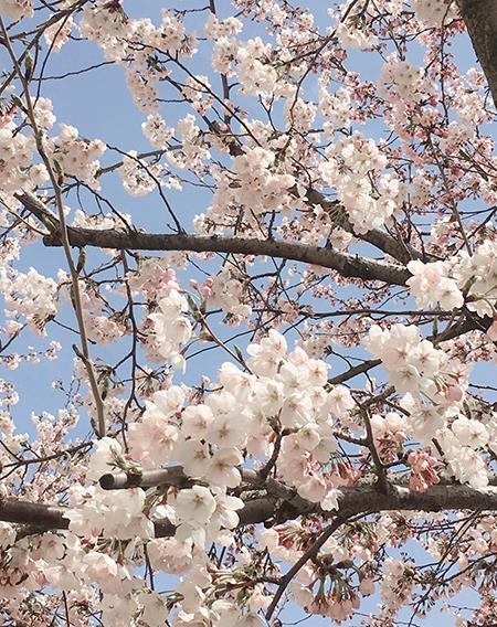 春のたより